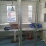 cattery in essex