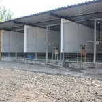 large kennel