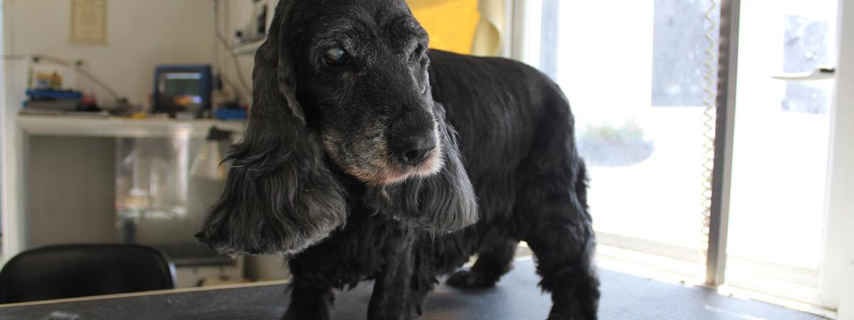 dog groomer in essex