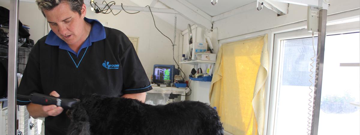 dog grooming in essex